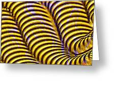 0647 Abstract Thought Greeting Card