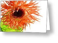 0690c-006 Greeting Card