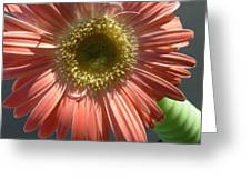 0795 Greeting Card