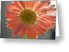 0803 Greeting Card