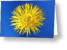 0813-001c Greeting Card