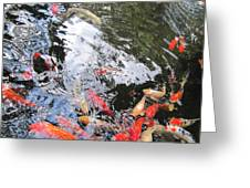 095 Koi Greeting Card
