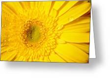 0953c Greeting Card