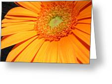 0977-11c Greeting Card