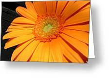 0977c Greeting Card