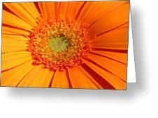 0982-4c Greeting Card