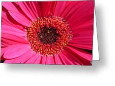 0994-1c Greeting Card