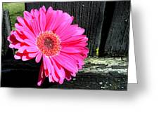 0996c Greeting Card