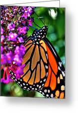 007 Making Things New Via The Butterfly Series Greeting Card