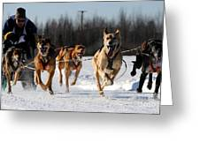 2011 Limited North American Sled Dog Race Greeting Card