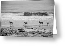 4 Deer In Ocean Black And White Greeting Card