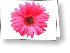5556c Greeting Card