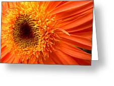 6137 Greeting Card