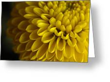 A Bouquet Of Button Chrysanthemums Greeting Card