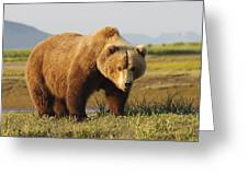 A Brown Grizzly Bear Ursus Arctos Greeting Card