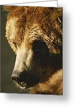 A Close View Of The Face Of A Grizzly Greeting Card