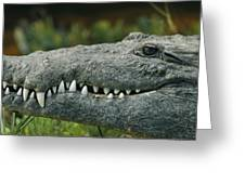 A Close View Of The Teeth Of An Greeting Card