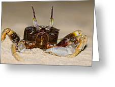 A Crab On The Shore  Greeting Card