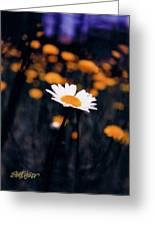 A Daisy Alone Greeting Card