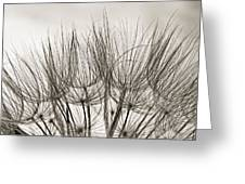 A Delicate World Monochrome Greeting Card