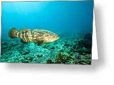 A Goliath Grouper Effortlessly Floats Greeting Card