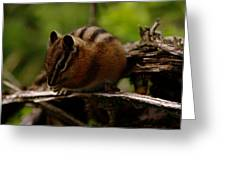 A Little Chipmunk Greeting Card