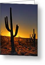 A Saguaro Sunrise  Greeting Card