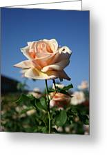 A Texas Rose Greeting Card