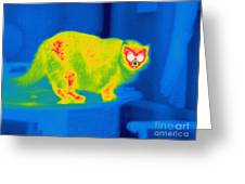 A Thermogram Of A Long Haired Cat Greeting Card