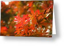 Acer Leaves Greeting Card