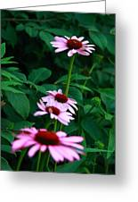 African Daisies 4 Greeting Card