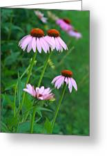 African Daisies 5 Greeting Card