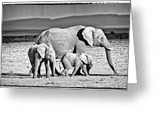 African Elephant In The Masai Mara Greeting Card