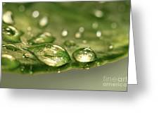 After The Rain Greeting Card by Sandra Cunningham
