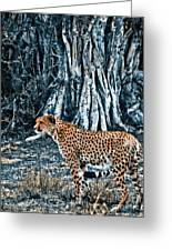 Alert Cheetah Greeting Card by Darcy Michaelchuk