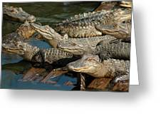 Alligator Pool Party Greeting Card