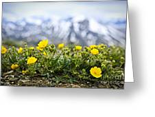 Alpine Meadow In Jasper National Park Greeting Card by Elena Elisseeva