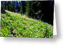 Alpine Meadow Vii At Mount Rainier Greeting Card