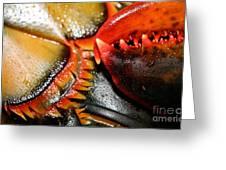 American Lobsters Greeting Card