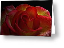 Annaversary Rose I  Greeting Card