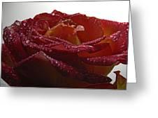 Annaversary Rose II Greeting Card