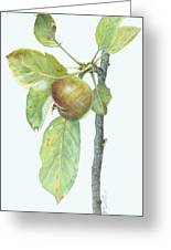 Apple Branch Greeting Card by Scott Bennett