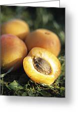 Apricots Greeting Card by Veronique Leplat