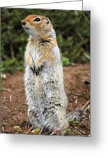 Arctic Ground Squirrel Greeting Card