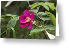 Arctic Rose Greeting Card