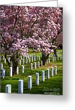 Arlington Cherry Trees Greeting Card