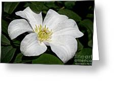 Artic White Greeting Card