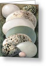 Assorted Birds' Eggs, Historical Art Greeting Card