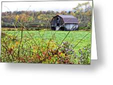 Autumn Along Tioga Road Greeting Card