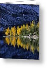 Autumn, Alpine Larch Trees, Lake Agnes Greeting Card